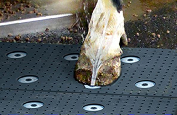 Materssao spray per la cura dello zoccolo agrisystem srl