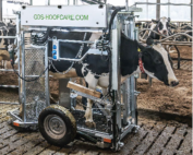 travaglio idraulico per bovini agrisystem srl