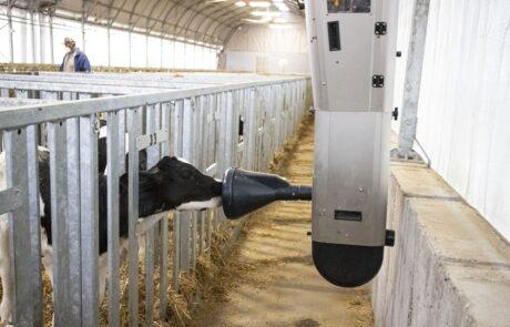 Calf Rail nostra installazione agrisystem srl